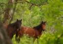 Nouă cai furaţi de pe islazul din comuna Valea Lungă